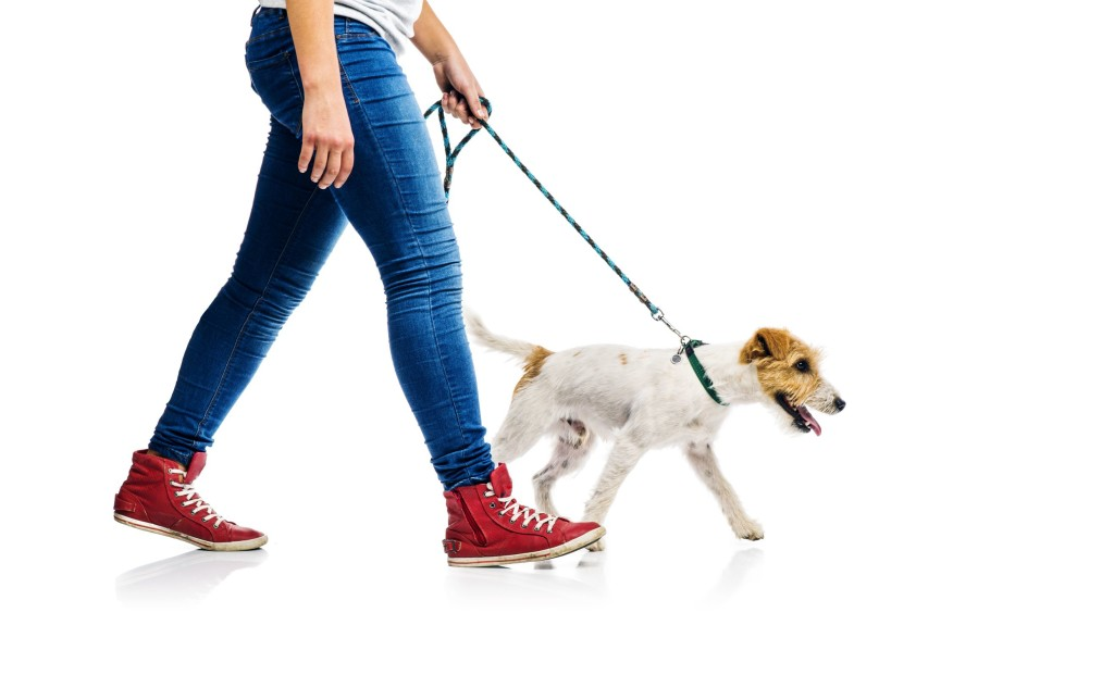 What Is Dog Spinal Walking